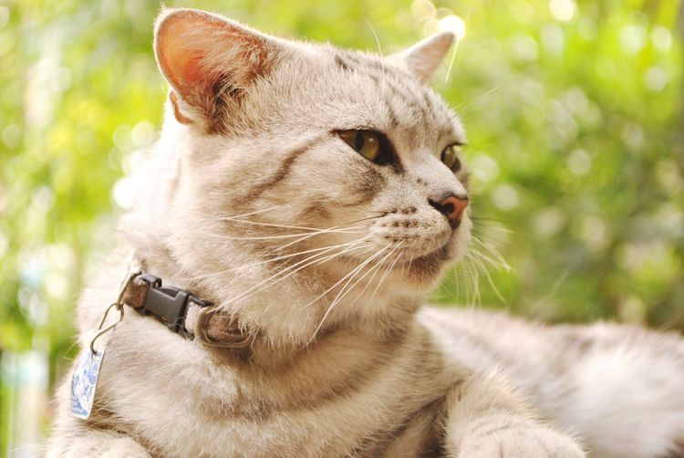 Close-up of cat looking away while sitting against trees