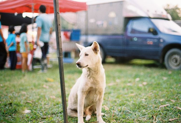 Close-up of dog standing by car