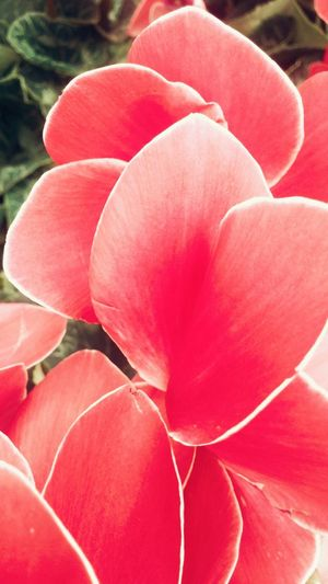 Was at the flower shop today..so i just photographed everything coral! Coral By Motorola Outdoors Flowers Nature Pretty Blossom Spring Spring Into Spring Plants Sunshine
