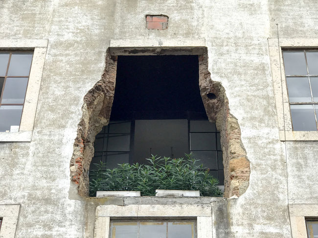 Architecture Building Building Exterior Built Structure Close-up Day Growth Ivy Lx Factory Nature No People Outdoors Plant Tree Window