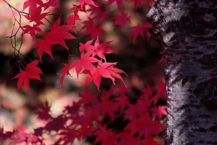 Japan Light And Shadow Nature_collection 晩秋 EyeEm Nature Lover Colours Of Autumn 散歩 Tree Taking Photos 🍁 紅葉
