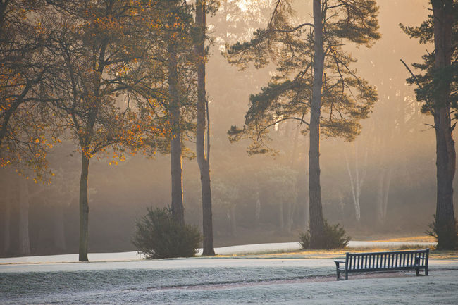 park bench on a frosty morning Autumn Beauty Beauty In Nature Day First Sunlight Fog Forest Frosty Mornings Landscape Mountain Natural Disaster Natural Parkland Nature No People Outdoors Snow Social Issues Sun Tree Winter