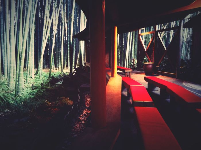 Japan Scenery bamboo temple Zen @kamakura