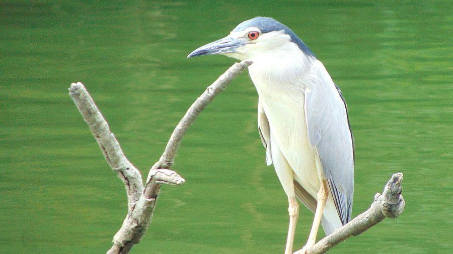 149 | นกน้อย เที่ยวเชียงใหม่ เชียงใหม่ เที่ยว Chiang Mai | Thailand Chiangmai วัดอุโมงค์ Bird Beak Close-up Green Color Grass