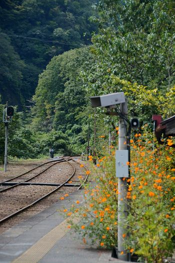Station Railway EyeEm Nature Lover Flowers Old