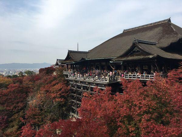 Autumn Autumn Leaves Japan Kyoto Autumn Kyoto Temple Kyomizudera Kyomizutemple Kyoto First Eyeem Photo