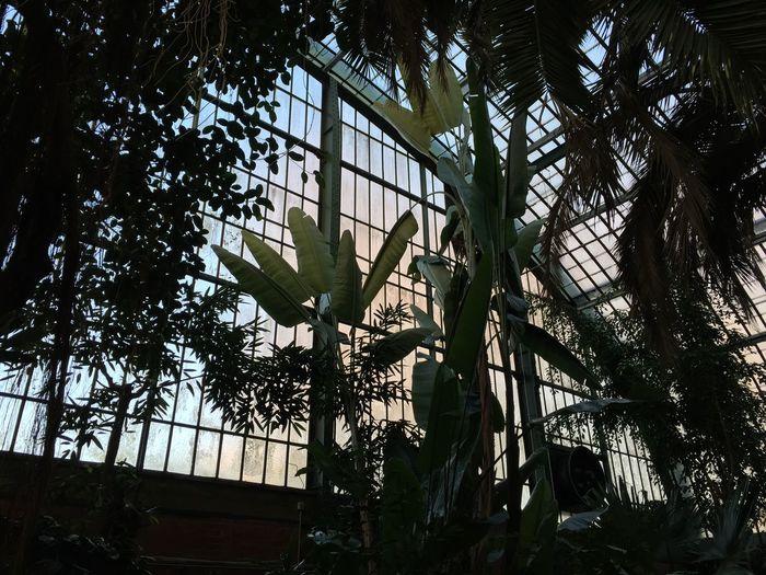Urban Jungle Greenhouse Palm Trees