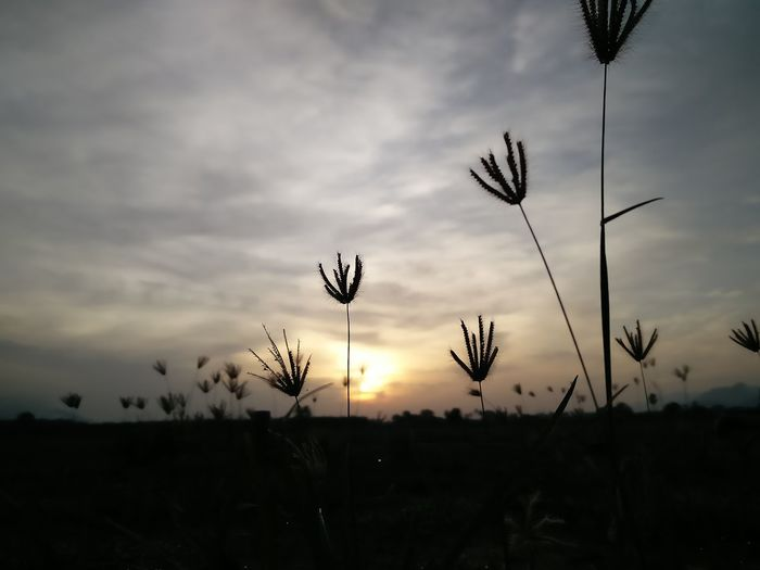 when small is big, simple get significant. #HUAWEI Photo Award : After Dark #grass #greenlife #flowers #skyhigh #insignificant #beautiful #silhouette #dawn Travel Photography Flower Sunset Flying Silhouette Cloud - Sky Plant Countryside Growing Sunbeam Tranquil Scene Scenics Calm Tranquility Idyllic Sun Dramatic Sky Sunrise Farmland Sky Only