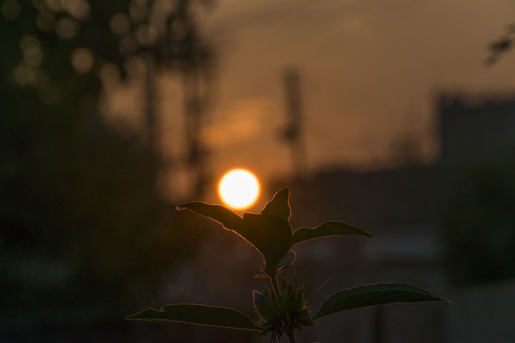when morning blesses you with glowing flower. Every morning is special may or may not be for you but may be for that Ant near your feet or that 🐝 who will taste nectar from this flower. Sunrise Sunset Sunlight Glow Glowing Flower Bokeh Parbhani Puneinstagrammers Mumbai Urban Landscape Urban Sunrise Urban Sunrise Urban Scene No People Sun Close-up Sunset Cold Temperature Winter Outdoors Nature Sky