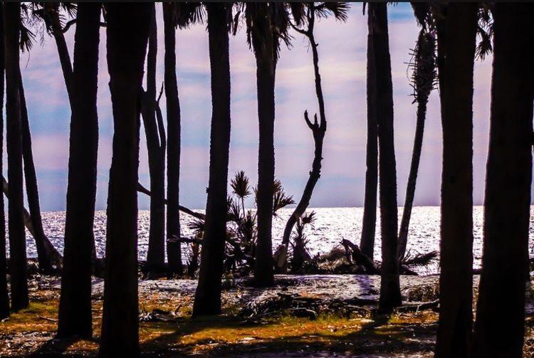 Trees ocean