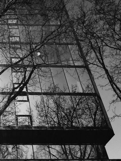 Monochrome Photography Reflections And Shadows Reflection Perfection  Reflected Glory Black And White Photography Lines And Patterns Patterns & Shapes Glass Building Reflection On Building Reflection Obsession Reflection Of Trees Light And Reflection