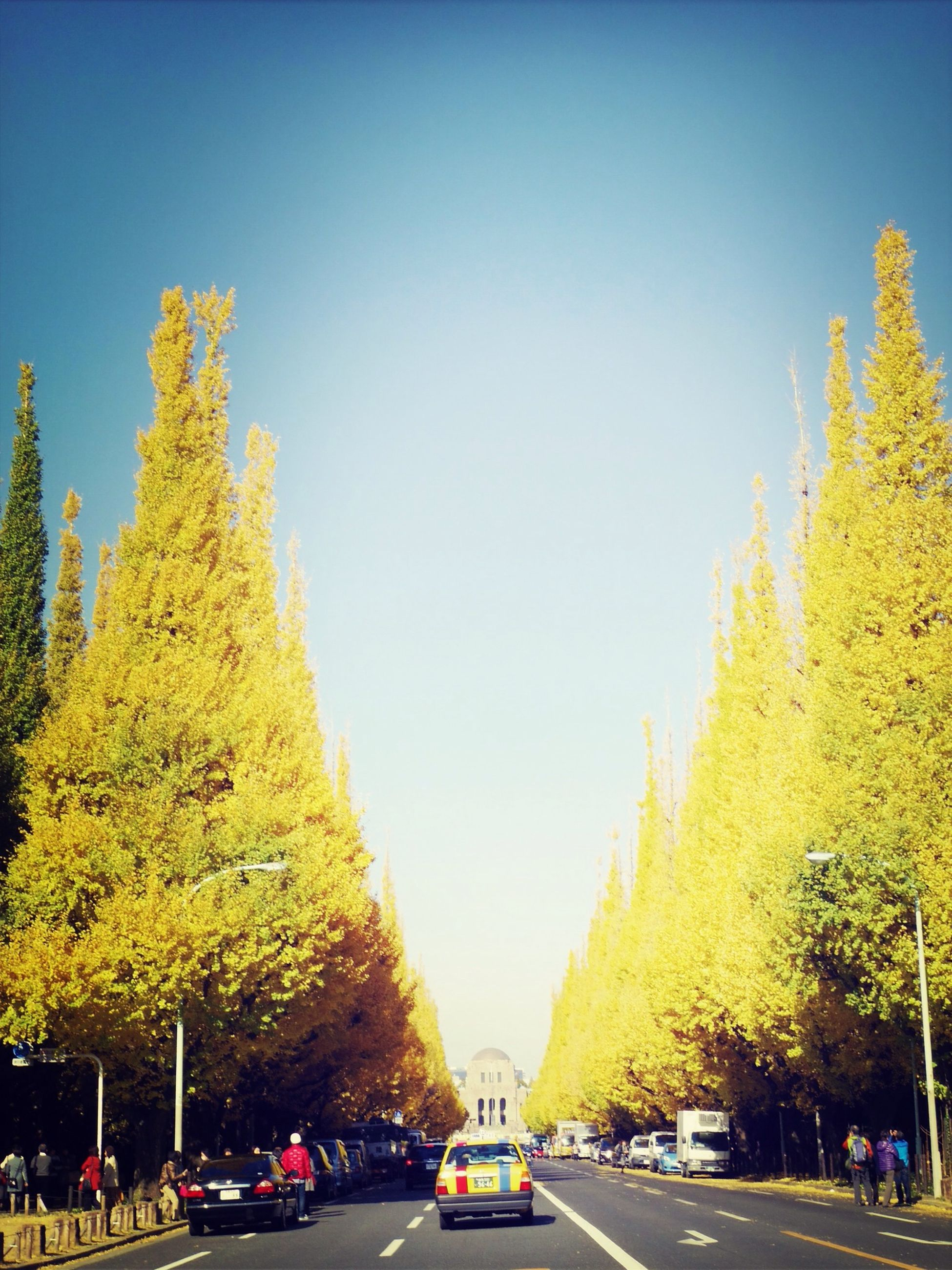 tree, clear sky, transportation, road, growth, the way forward, copy space, street, season, autumn, nature, yellow, car, land vehicle, outdoors, change, mode of transport, beauty in nature, day, plant