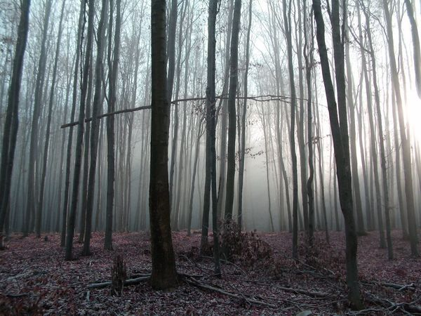 Looking for the sun Beauty In Nature Bükk Fog Foggy Forest Forestwalk Hungary Landscape Nature No People Outdoors Peace And Quiet Scenery Sunlight Tranquility Travel Tree Trees Woods