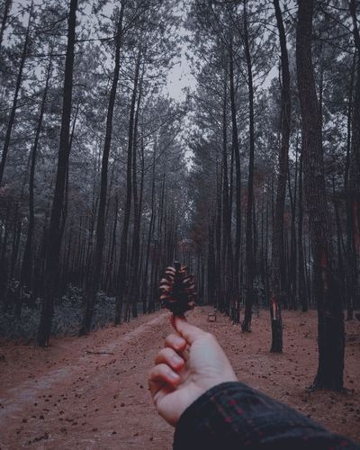 Person hand by trees in forest