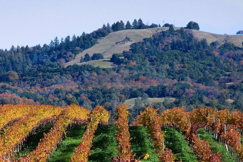 Vineyard in Cloverdale, California Vineyard