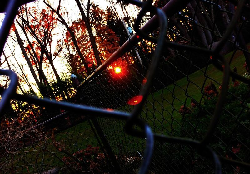 My favorite shot I took on Thanksgiving... Chainlink Fence Outdoors No People Protection Tree Low Angle View Growth Day Illuminated Nature Close-up Sky Arts Culture And Entertainment Dof_brilliance Backgrounds To All My Friends On EyeEm Outofthewayangles Beauty In Nature Red As Shot Unedited The Purist Mobilephotography Autumn