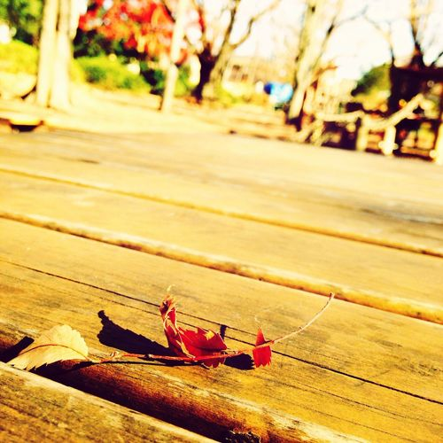 Leaf Taking Photos Hanging Out 冬枯れ
