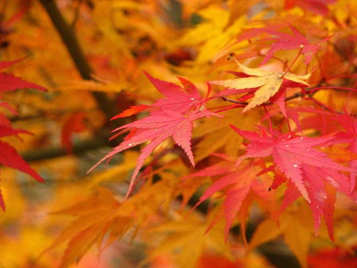 見納め Autamn Nature 紅葉 Japan