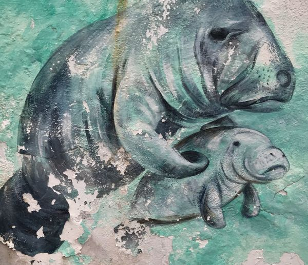 No People Outdoors Manatee Painting old with peeling paint The Manatees Look Sad😔 Mother And Baby at gulf view resort grassy key, marathon Florida USA