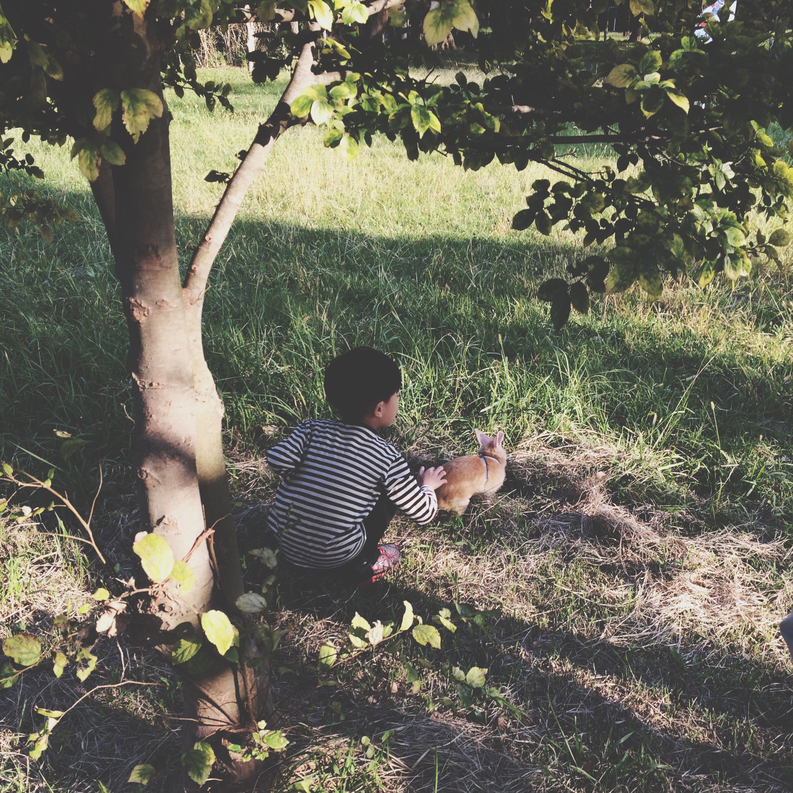 leisure activity, lifestyles, tree, grass, sunlight, growth, full length, childhood, casual clothing, plant, park - man made space, rear view, nature, person, standing, outdoors, day, girls