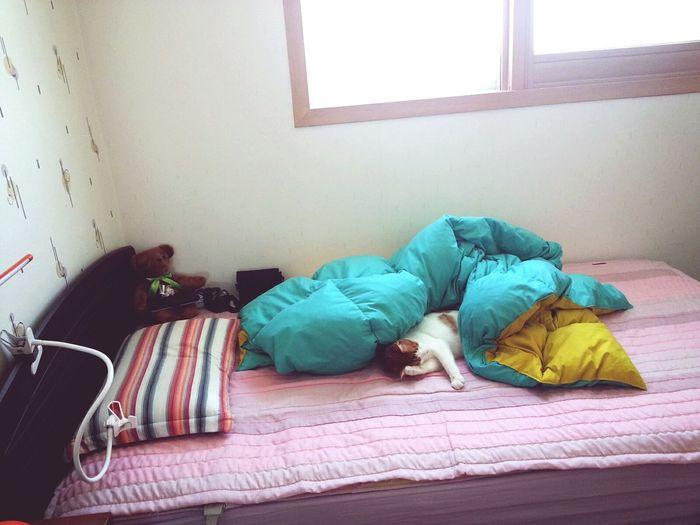 Cat In My Bed