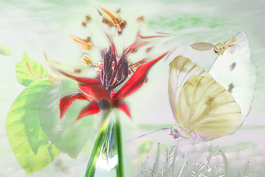 Collage Green Beauty In Nature Bee Butterfly Drop Flower Fragility Leaf Leaves Nature Petal Springtime