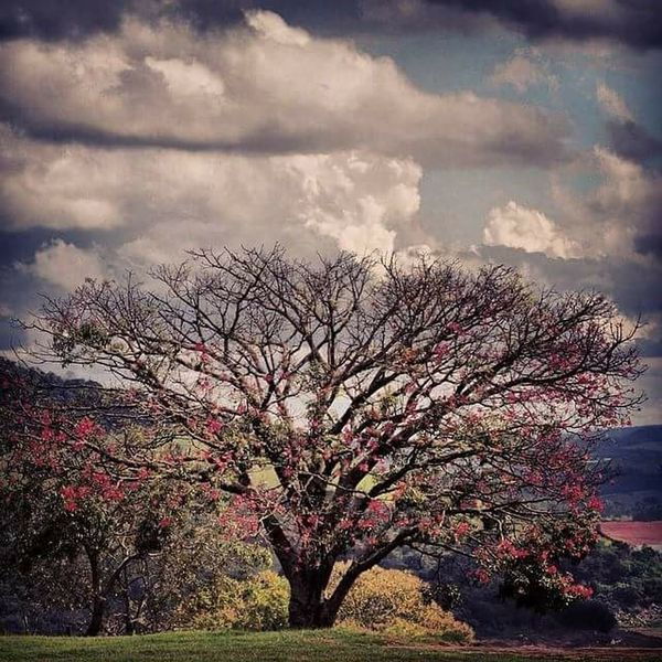 Nature EyeEm Nature Lover Nature_collection Naturelovers Beautiful Nature Photography Brazil Flaviogomes Tree Sky Clouds And Sky