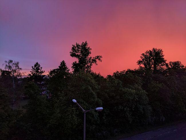 Beauty In Nature Outdoors Purple Scenics - Nature Sky Sunset Tranquil Scene Tree