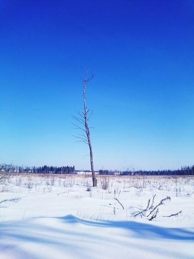 Taking Photos Hello World Relaxing Enjoying Life Russia Forest Ugly Nature Sky Scenery Beautiful Nature Winter Lonley Tree With Blue Sky Lonley Tree Tree