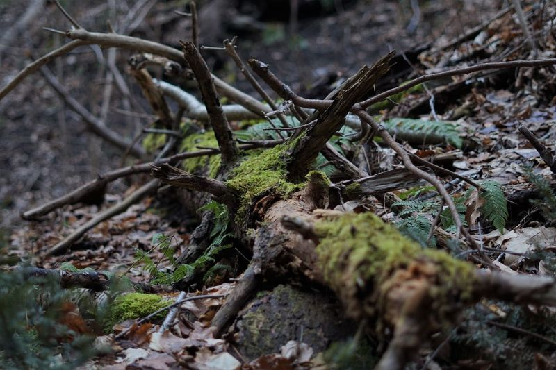 Close-up of fallen tree in forest