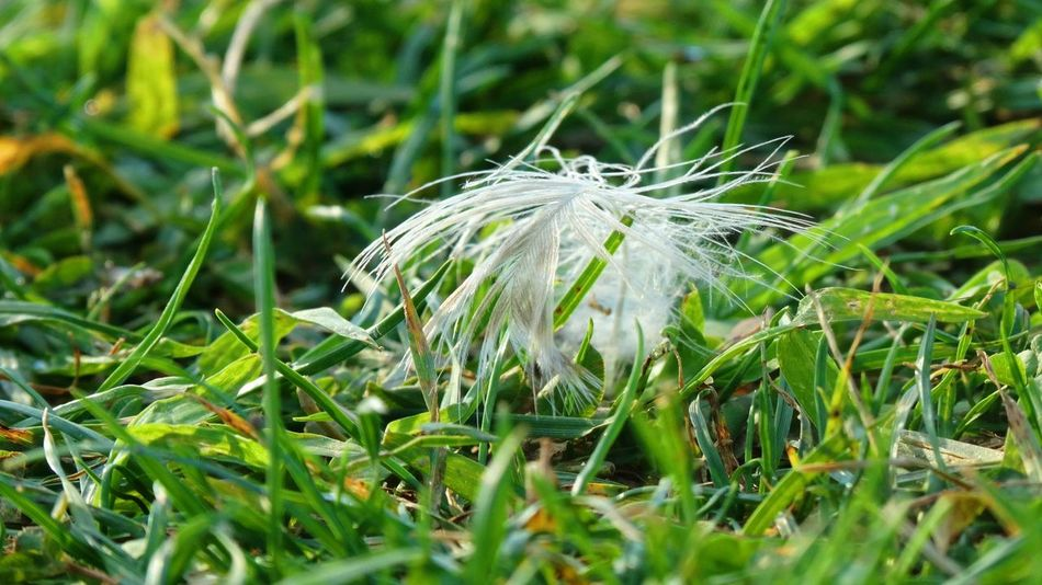 ... EyeEmNewHere Beauty In Nature Day Grass Green Color Nature Plumage Plume