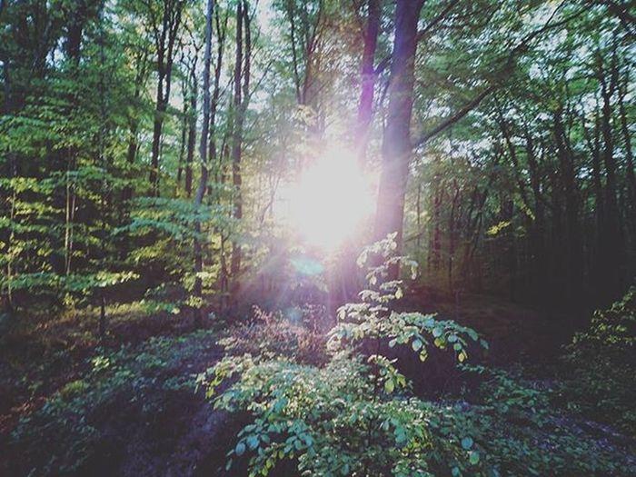 Sun Forest Trees Treeofinstagram Tree Sunshine Naturephotography Nature_perfection Nature Iggermany Igersgermanyofficial Igersoftheday Igers_germany Instalike Instsize Instadaily Vscomood VSCO Vzco Bestoftheday Beautiful