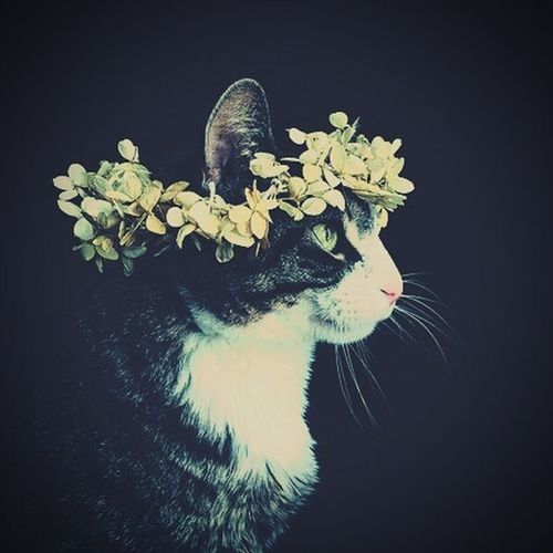 First Eyeem Photo Cat Flowers