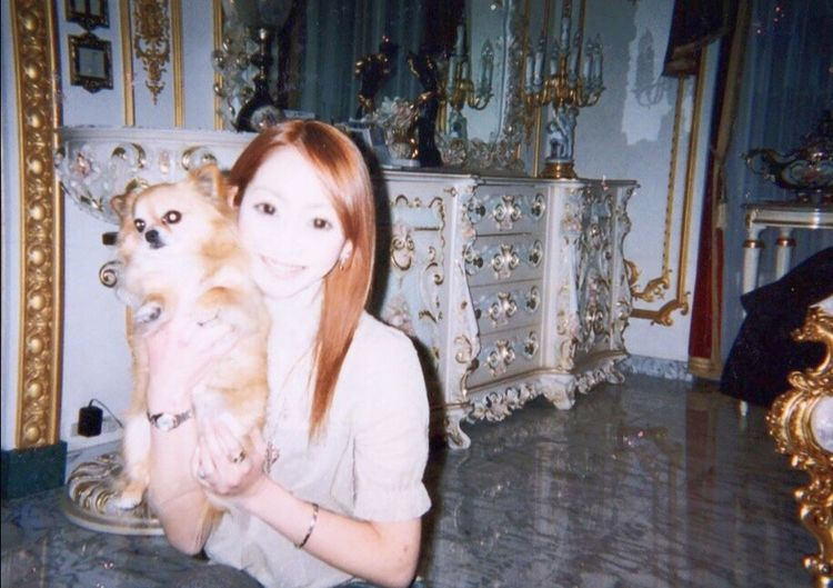 Rui🐶💛💛💛 Domestic Animals One Animal Dog Architecture Pets Looking At Camera Looking Day Animal 動物 チワワ Chihuahua Love 犬 Pet 家 House Myhome Home Rui ルイ Me My Rolex Datejust