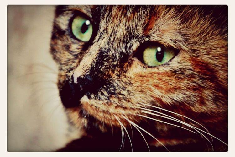 Zoe ♥ Cat Cats Love