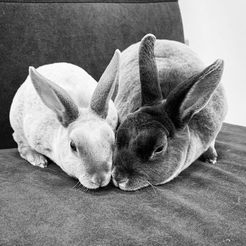 Rabbits relaxing on seat at home