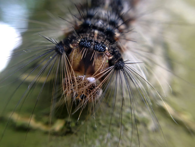Bug Bug Eyes Bug Life Close-up Fragility No People Selective Focus Zoology EyeEmNewHere