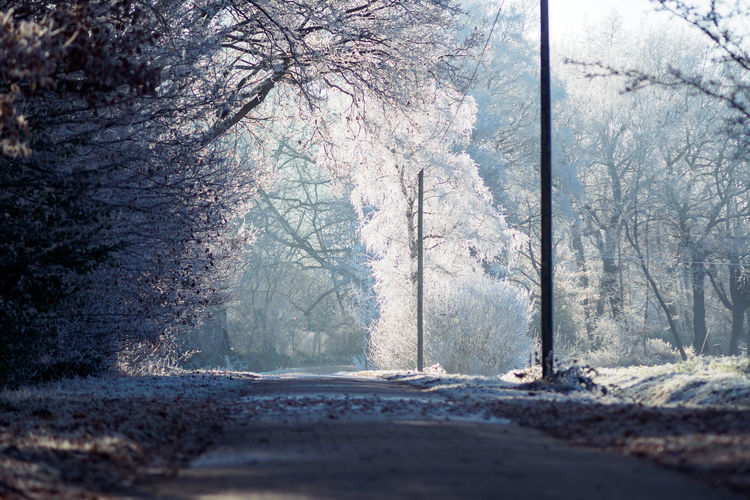 Road Amidst Bare Trees In Forest During Winter