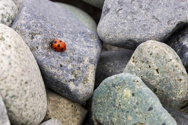 Ladybug Animals
