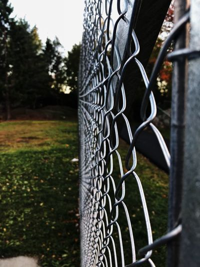 A fence is not just a barrier. Plant Tree No People Metal Safety Nature Fence Barrier Protection Security Boundary Grass Focus On Foreground Close-up Chainlink Fence Day