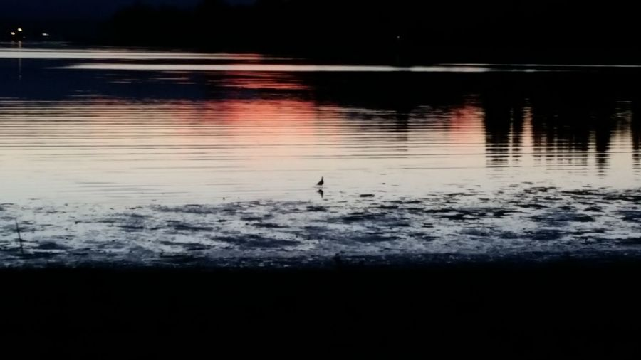 no edit or filter. at the beach Water Reflection Tranquility Lake Bird Nature Night Tranquil Scene Scenics Outdoors Dark City Life Swimming Beauty In Nature Majestic No People Eye4photography  EyeEm Nature Lover The Purist (no Edit, No Filter) EyeEm Gallery