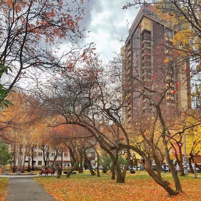 Autumn Colors Autumn Leaves Iphoneartmobile Yekaterinburg Kostasleko
