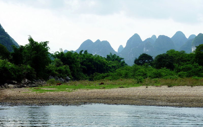 Guilim landscape with rock formations and LI river, China EyeEm Nature Lover EyeEm Selects EyeEm Gallery Animal Themes Beauty In Nature Cows Day Eye4photography  Forest Guilin Landscape Mammal Mountain Mountain Range Nature No People Outdoors River River Bank View Scenics Sky Tranquil Scene Tranquility Tree Water