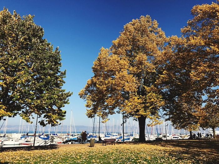 Autumn trees by harbor against blue sky
