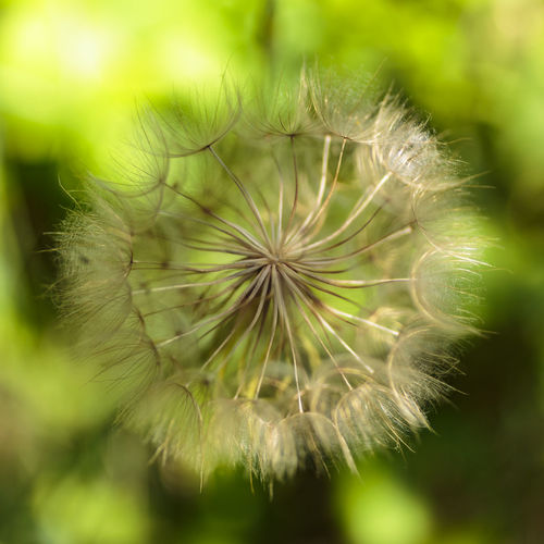 Dandelion seed head on a farm near Morganston, Ontario, Canada Farm Green HEAD Nature Ontario Plant Seed Botany Canada Close-up Dandelion Dandelion Seed Flower Flower Head Focus On Foreground Fragility Growth Morganston Nature No People Outdoors Plant Summer Uncultivated Wildflower