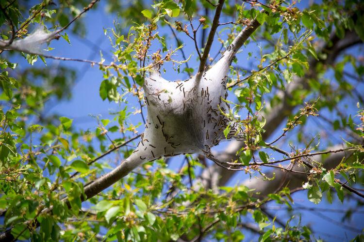 Close-up of cob web on tree