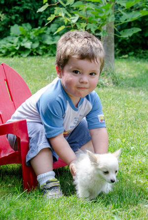 a young boy picks up a tiny white puppy Kids Animal Themes Boys Casual Clothing Child Childhood Cute Dog Domestic Domestic Animals Friendship Front View Grass Innocence Looking At Camera Mammal Nature One Animal One Person Outdoor Outdoors person Pets Portrait Real People