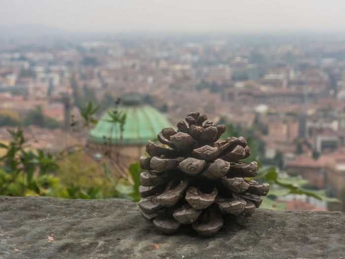 City Architecture Building Exterior Focus On Foreground Built Structure Nature Cityscape No People Day Building Outdoors Close-up Sky Plant Pine Cone Tree Growth Landscape Environment Urban Skyline Coniferous Tree Bergamo Cityview Italy