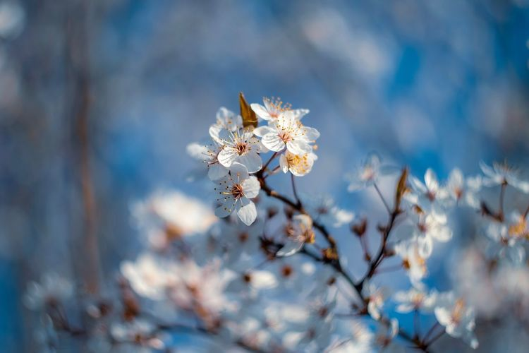 EyeEm Selects Flower Flowering Plant Plant Beauty In Nature Fragility Close-up Vulnerability  Freshness Nature Day Growth Focus On Foreground No People Tree White Color Selective Focus Springtime Blossom Petal Outdoors