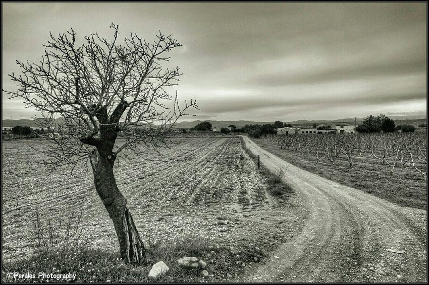 white and black Tarragona Mora De Ebro